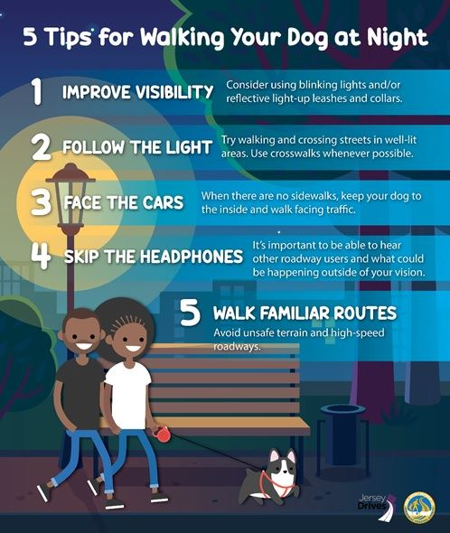 Tips for Walking Your Dog At Night